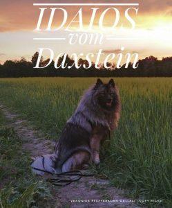 Wolfsspitz-Deckrüde Idaios vom Daxstein
